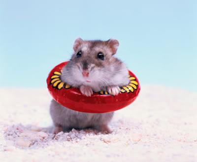 Hamster_beach